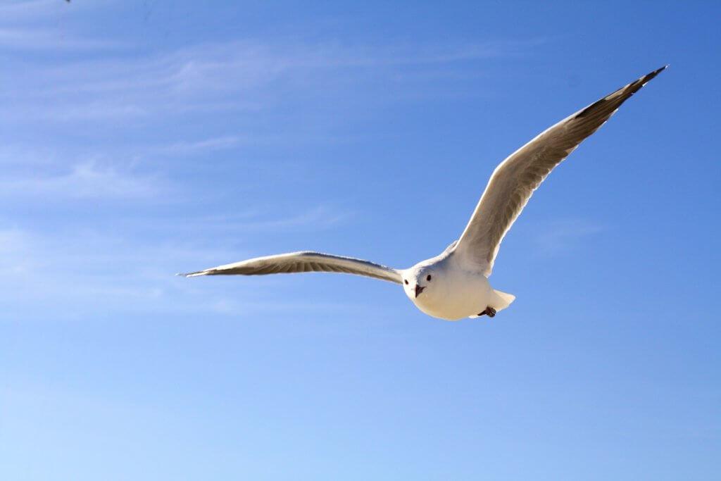 bird-flying