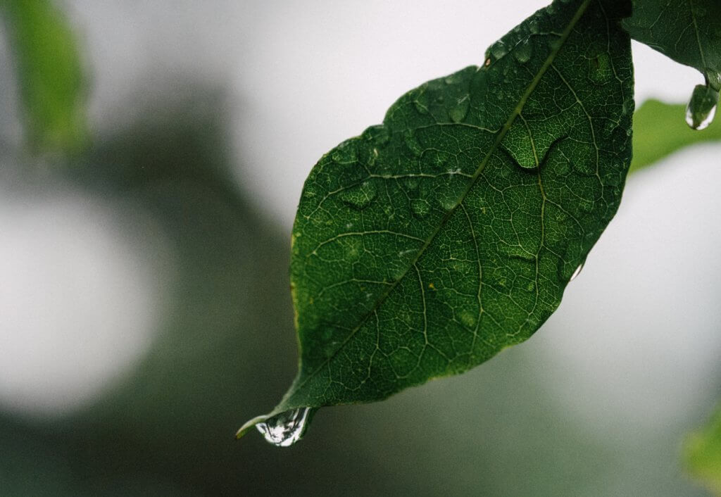 leaf_drop