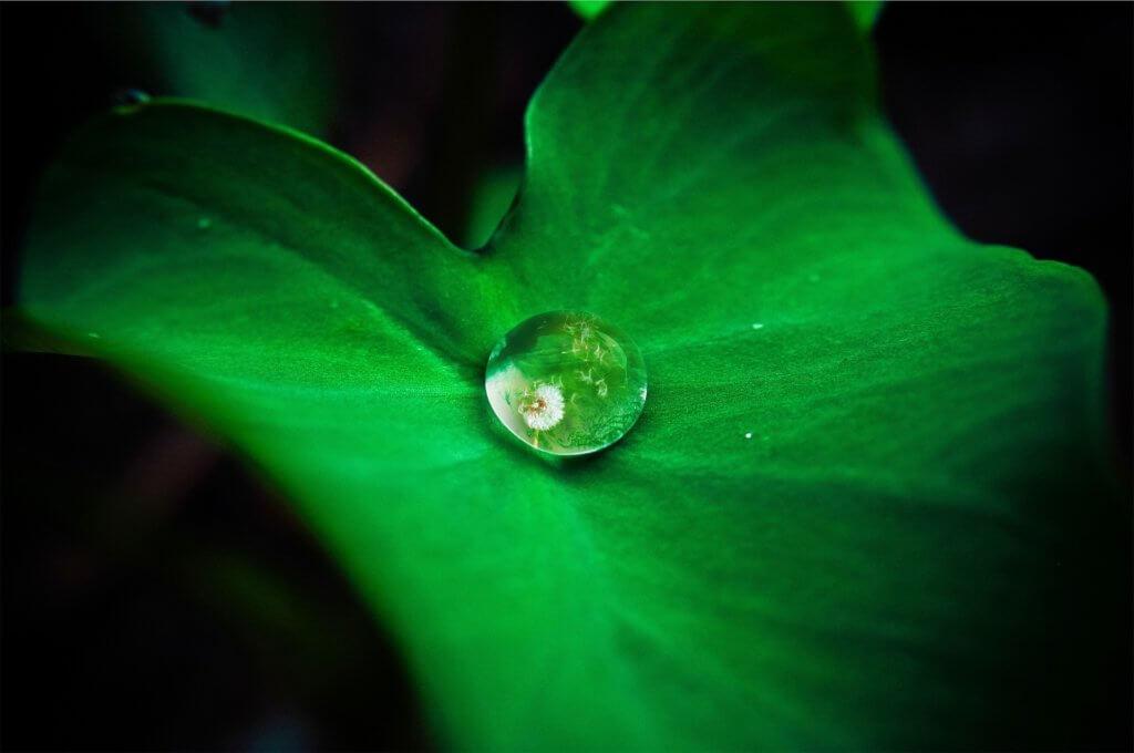 leafdrop2
