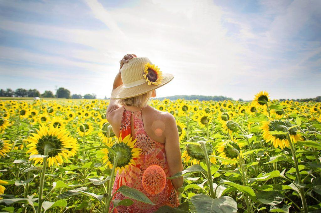 sunflowers88