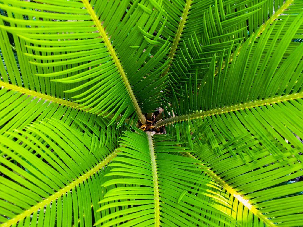 palm01