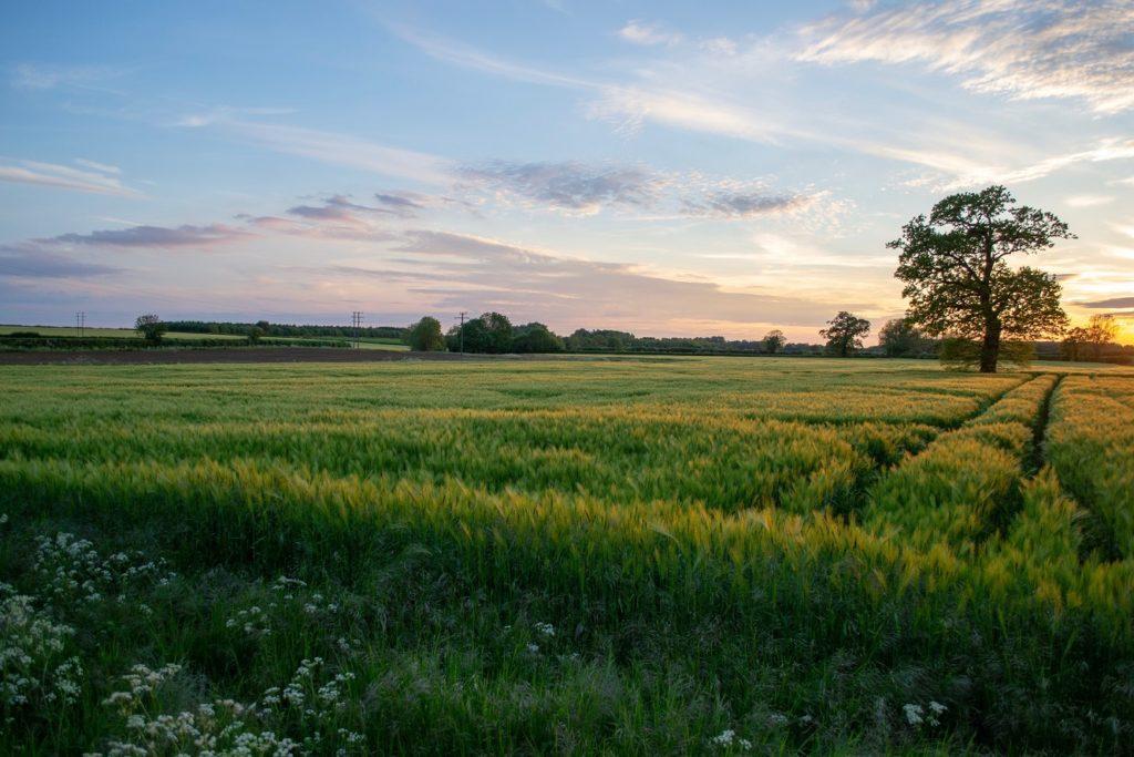 barley32